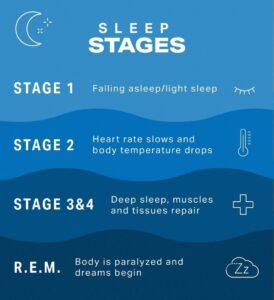 Sleep stages info graphic